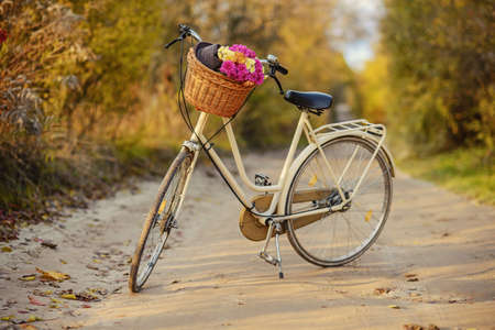 bicycle with a basket full of field flowers