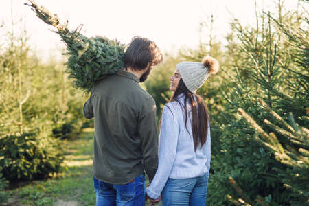 Back view of a beautiful young couple carrying a beautiful Christmas tree to their car among the fir tree plantations.
