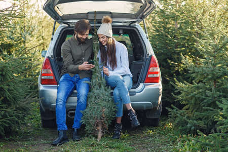 Joyful bearded man and pretty woman in hat sitting in car trunk holding fir tree and using smartphone at plantation area