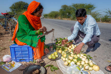 Colourful adult Indian woman selling the guava fruit to tourists on the road between Jaipur and RanthamboreRanthambore, Uttar Pradesh, India,  02 2013