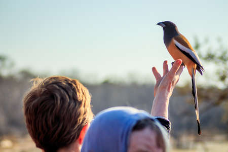 A tourist woman on a safari had a coloutful bird land on her finger in the afternoon photo