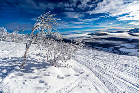 A snowy Lappland landscape in the north part of Sweden photo