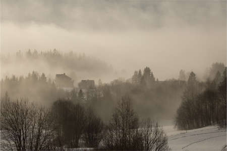 swept: Forest swept in haze Stock Photo