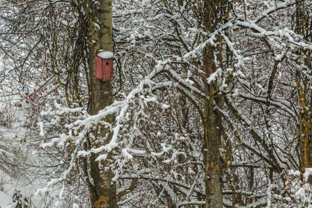 trait: Nesting box on an espe tree with snow on the rood and snowy branches surrounding it
