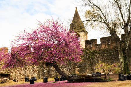 trait: Old fort in a small village in Portugal. Viana do Alentejo Editorial