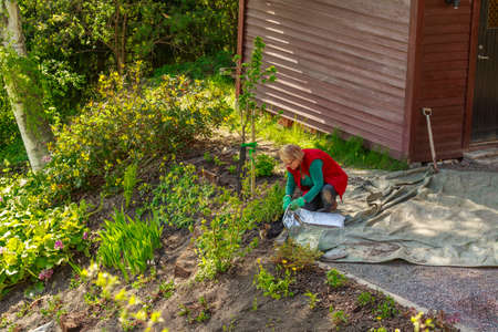 tog: Adult woman working with mulch in the garden an afternoon
