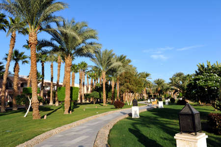 HURGHADA, EGYPT - OCTOBER 14, 2013:Beautiful palm trees in a tropical luxury hotel on the shores of the Red Sea. Editorial