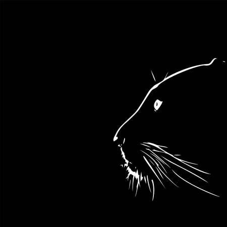 Panther walking from dark.