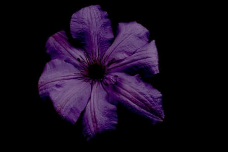 Beautiful flowers on a black background. An isolated photograph. Quality color