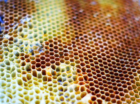 Honeycombs Pollen bees placed in cells The lack of sharpness of individual bees is due to their active movement. The brilliant wings of insects create light highlights.