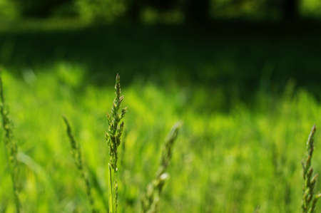Shoots of a young green grass on a dark blurry background in the park. Beautiful park Stock fotó - 128600282