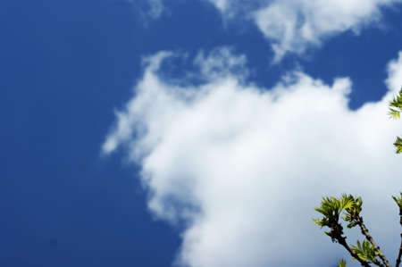Natural sun flare with blue clouds sky and green leaves, background for a booklet with a tree branch on a background of the sunny sky