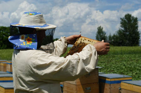 In the hands of the beekeeper honeycombs with honey and bees. Stock Photo