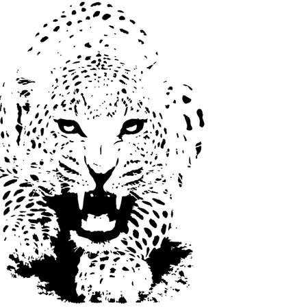 Tiger panther black and white - illustration vector.