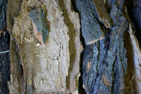 fire wood background texture. closeup of chopped fire wood stack Stok Fotoğraf