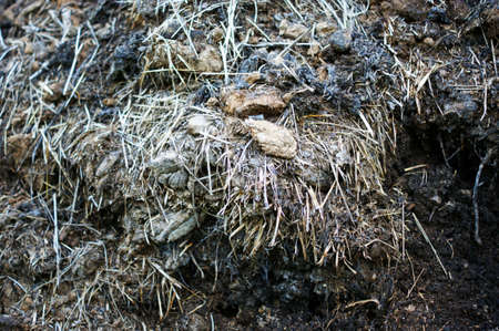 Fertilizer from cow and horse manure and straw. A pile of manure piled in spring and summer