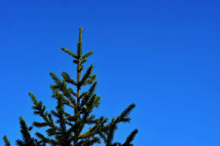 Christmas trees on a background of autumn blue sky