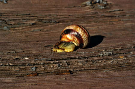 Snail is crawling on old wooden board close-up with copyspace Stock fotó