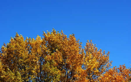 Colorful autumn leaves of trees on a background of blue sky