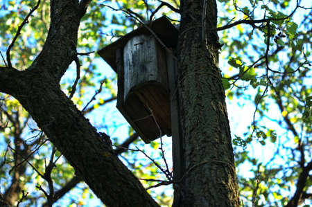 Old handmade wooden birdhouse hanging alone on a tree to protect birds.