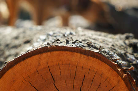 Texture of tree stump, background texture, close up