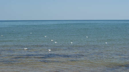 A seagull walking in shallow water near the sea shore, flying and swimming seagulls. It's a sandy beach Stok Fotoğraf - 159730507