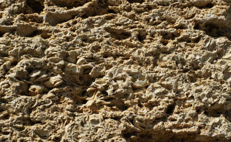 Brick wall of yellow shell rock. Closeup of shellstone texture. Background.
