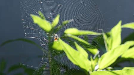 Spider web in the background of the sunrise. Garden landscape Reklamní fotografie