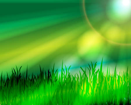Green meadow with sunrays Stock Vector - 18276922