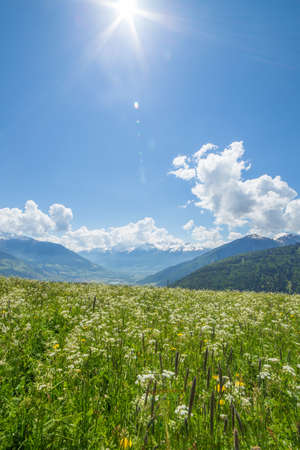 dandelion snow: Grean meadow in the mountains Stock Photo