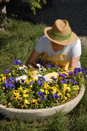 Elderly woman gardening  Stock Photo - 22580753