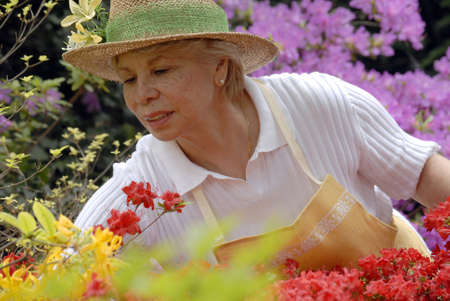 Elderly woman gardening  photo