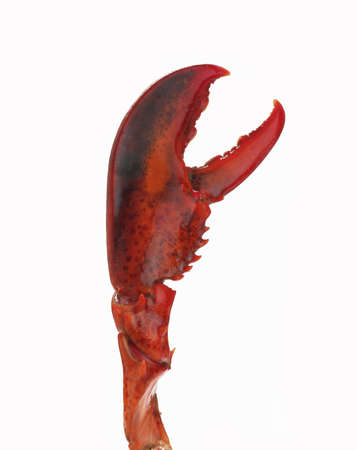 Lobster claw on white
