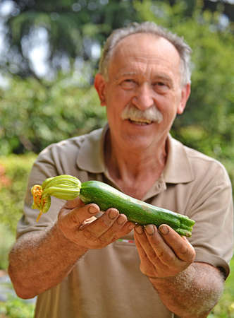 cultivator: Cultivator holding fresh zucchini from crop. Stock Photo