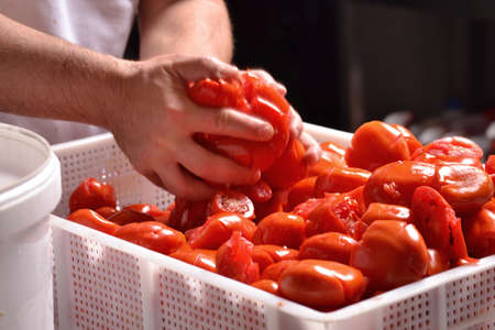 squeezing: Cook hands squeezing tomato preparing sauce. Stock Photo