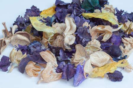 fiori secchi: Vari fiori secchi
