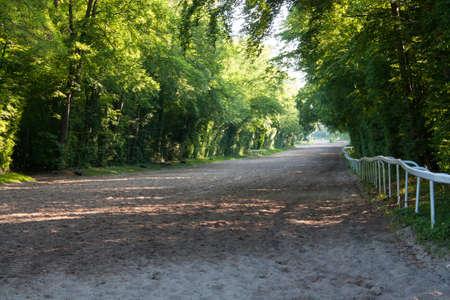 racehorses: Op de hellingen van de opleiding renpaarden in Chantilly Picardië - Frankrijk