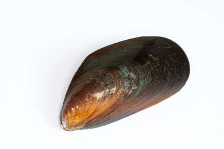 Blue mussel closed on white background