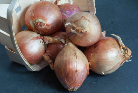 eating area: Rosé de Roscoff onion - Allium cepa - on slate background
