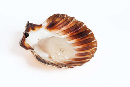 Coquille Saint Jacques open on white background