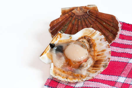 coquille: Coquille Saint Jacques open on background red and white plaid