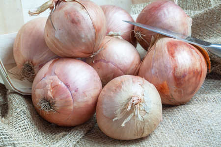 Roscoff pink onions in bulk on burlap