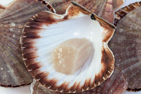 finesse: Coquilles St. Jacques heap Stock Photo