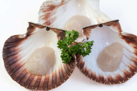 st jacques: Coquilles St. Jacques on a white background Stock Photo