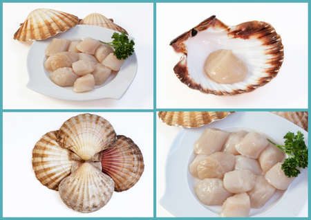 finesse: Coquilles St. Jacques