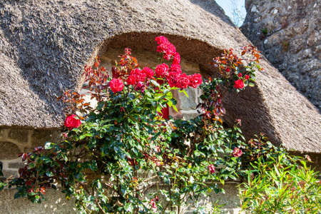 flowered: Flowered window and thatched Kercanic, Finistere, Brittany, France