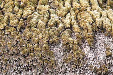Natural Roofing Materials: Moss On Thatched Roof