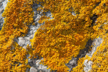 algas verdes: Rock covered with green algae at low tide