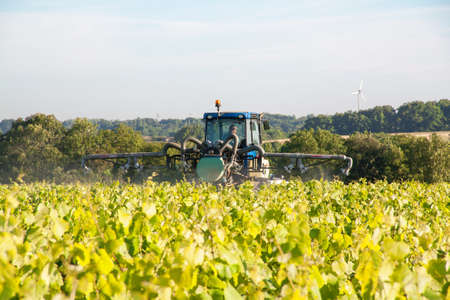 muscadet: Treatment of vines in the vineyards of Muscadet Vallet, Loire Atlantique, France Stock Photo