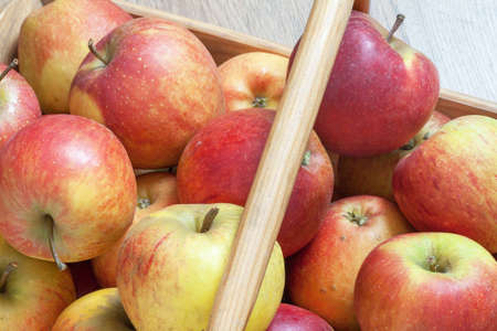 ble: Bicolour apples in a basket